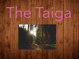 The Taiga by Edgemere Elementary