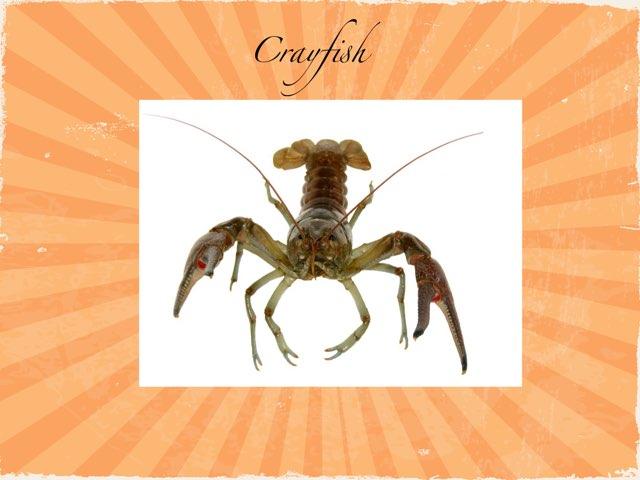 Thomas Crayfish  by Chris  Smith