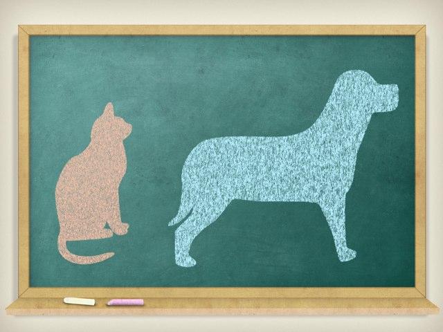 Tiere  by Nadja Blust