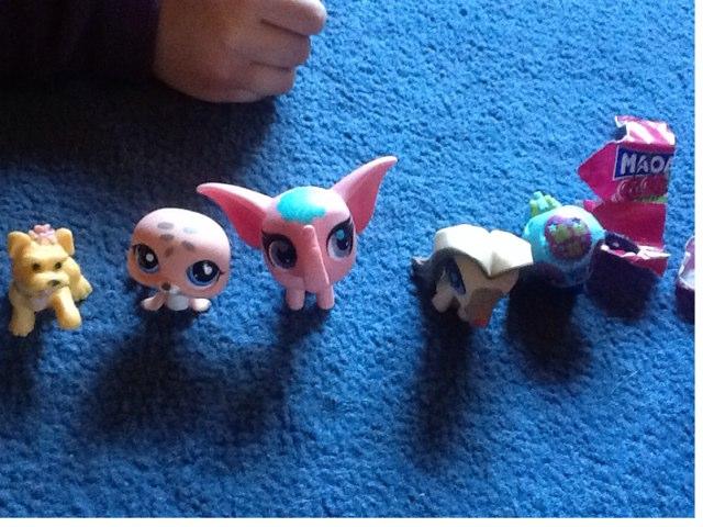 Tiny Animals by Barbi Bujtas