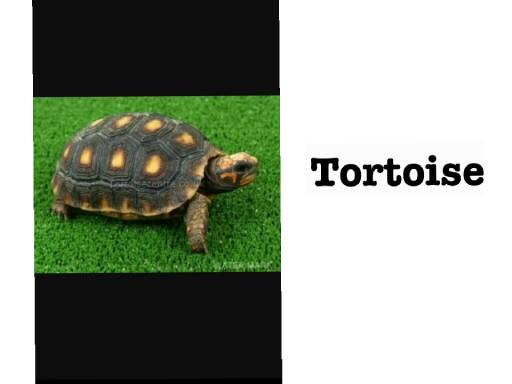 Tortoise by Fitta Astriyani