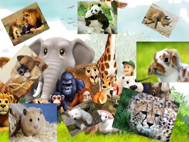 Trip To The Zoo  by Elisha Freeman