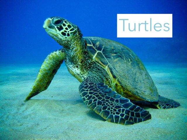Turtles by Jane Miller _ Staff - FuquayVarinaE