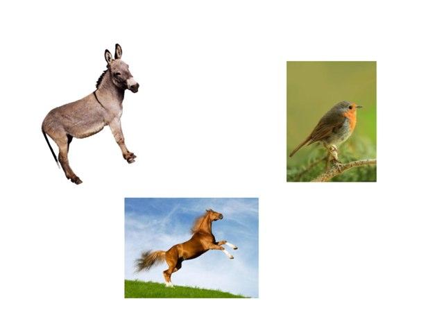 חיות באנגלית by גלי זימן