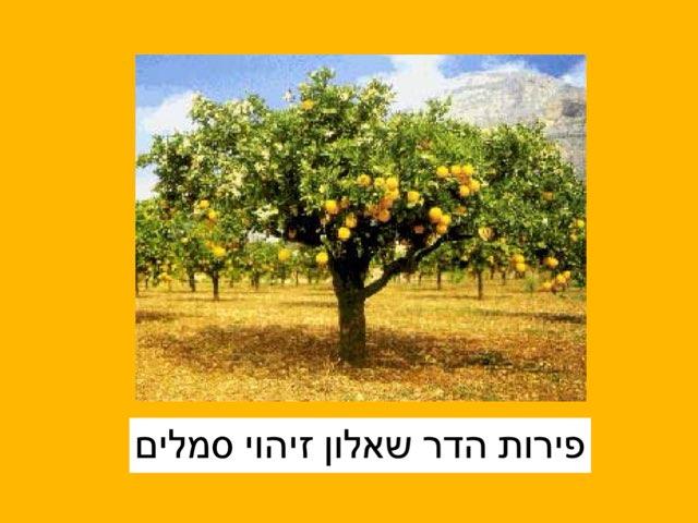 פירות הדר שאלון זיהוי סמלים by Efrat Ilan