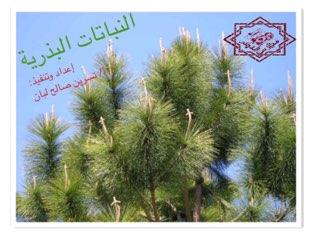 النباتات البذرية  أ/ نسرين لبان  by Nesreen saleh