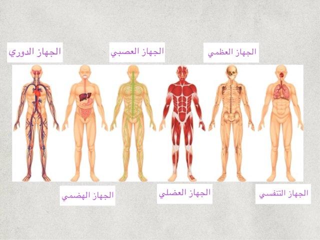 مراجعة أجهزة الجسم by Fatma Al-Ameer