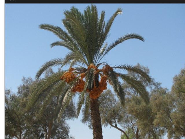 איזה עץ אני? 7 by Dana Golan