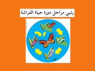 دورة حياة الفراشة by Abla amoon