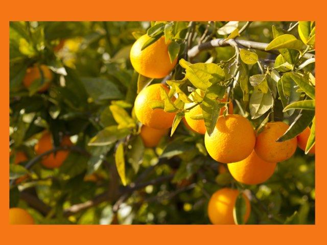 פירות הדר by Efrat Ilan