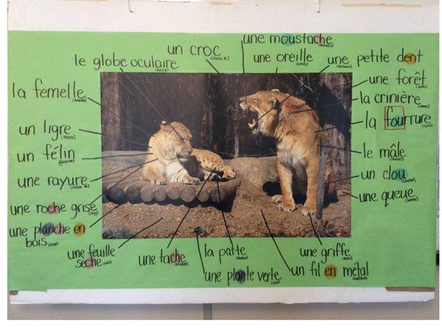 Casse-tête Ligres by Natalie Stewart