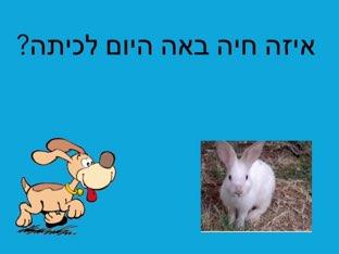 איזה חיה?  כלב by Lior mefano