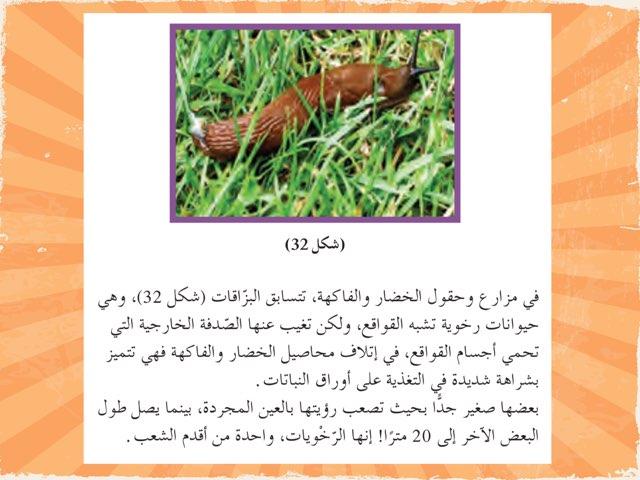 الرخويات by Huda Hussain