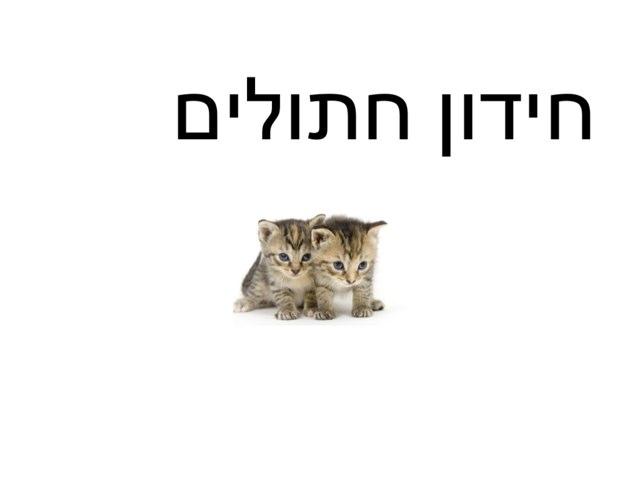 משחק  חתולים יובל by Yesod123 Yesod123
