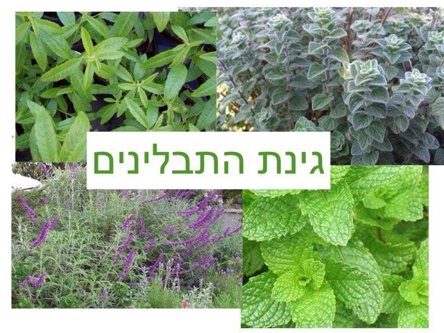 בגינת התבלינים by Orit Avner