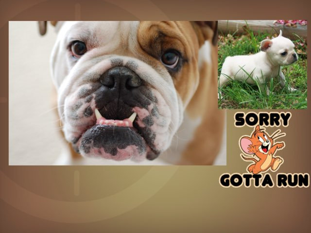 Bulldogs by Luis Andrade
