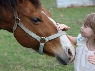 Horses in Hebrew! by Eden Movsovich
