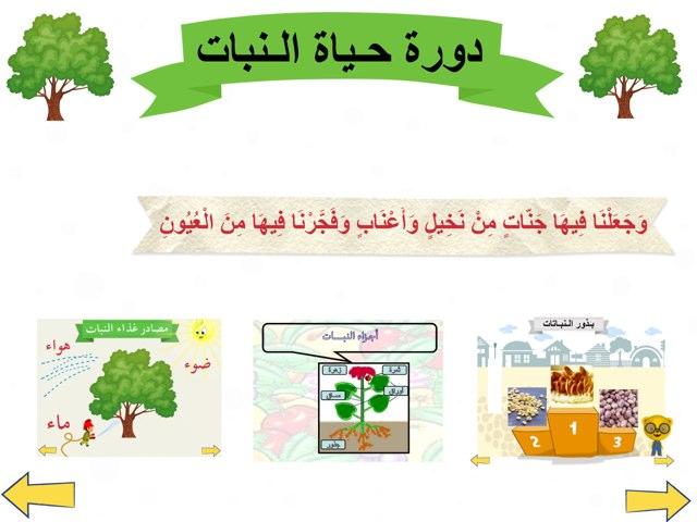 النبات by shosh0_it alajmi