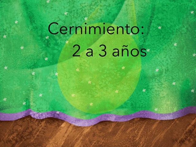Cernimiento 2 A 3 Años by Nicolle Rios