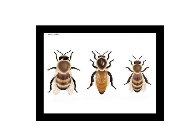 Μέλισσα by Dimitris Dell