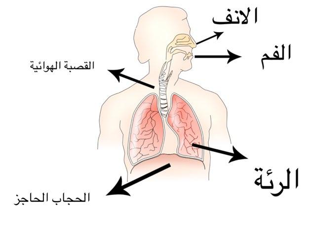 الجهاز التنفسي by Mai Al