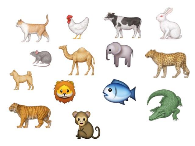 تعريفات حيوانات by afnan gh