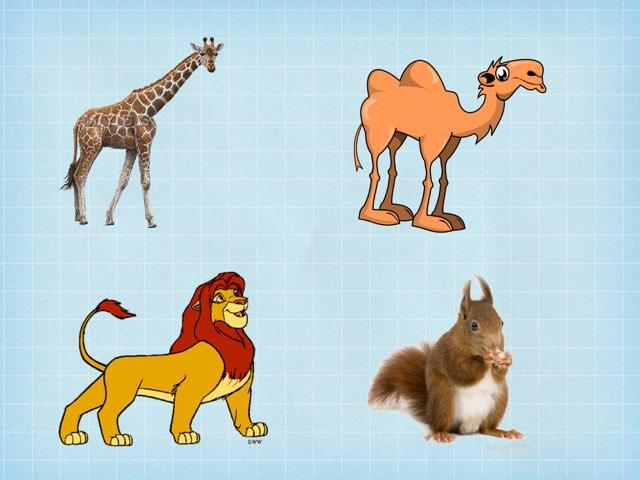 تصنيف الحيوانات by Fatma Al-Ameer