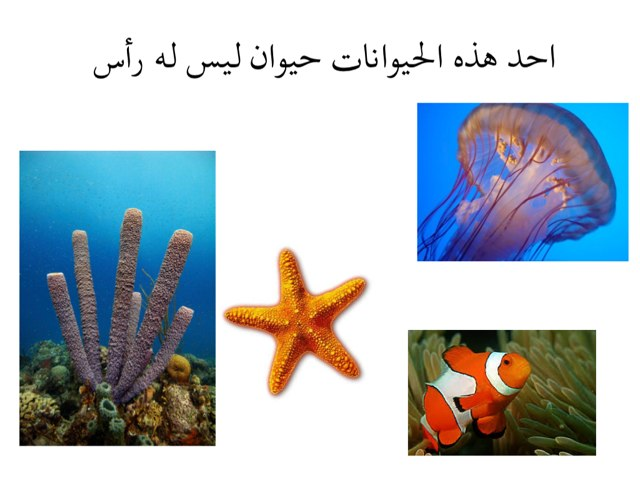لعبة 16 by Reem Reem