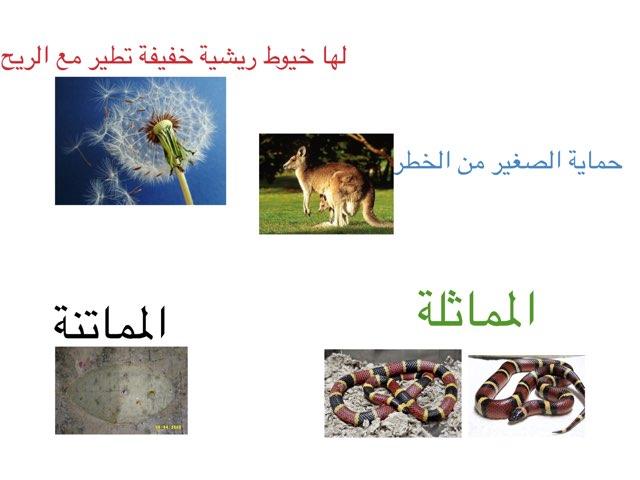 لعبة مراجعة التكيفات البنيوية by Ahmad ahmad