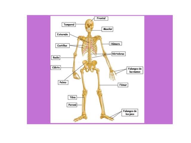 Huesos Y Músculos by Gonzalo  Fernández de Córdoba