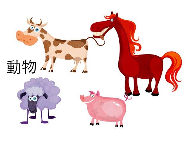 動物 by Cecilia Chan