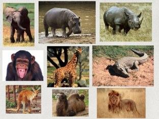 Animales del Zoológico by Muni Luetkenhaus