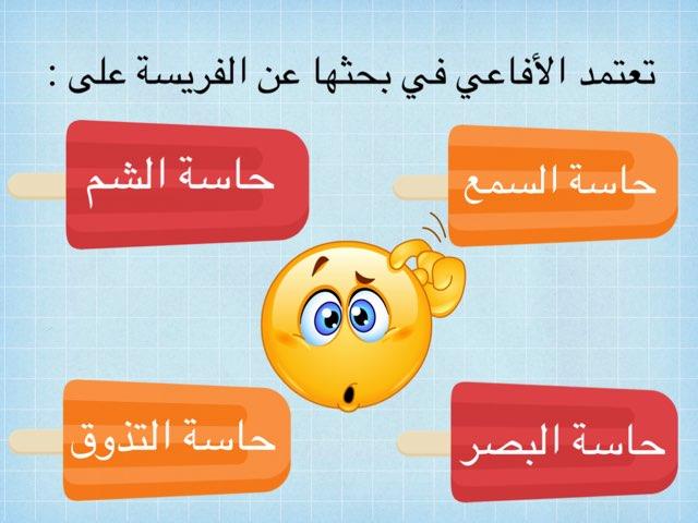 السنجاب الذكي by ahood alharbi
