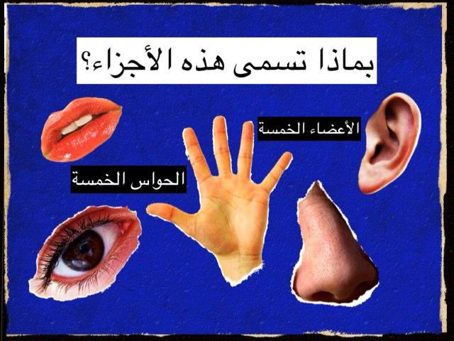 الجهاز العصبي by Mimi Imim