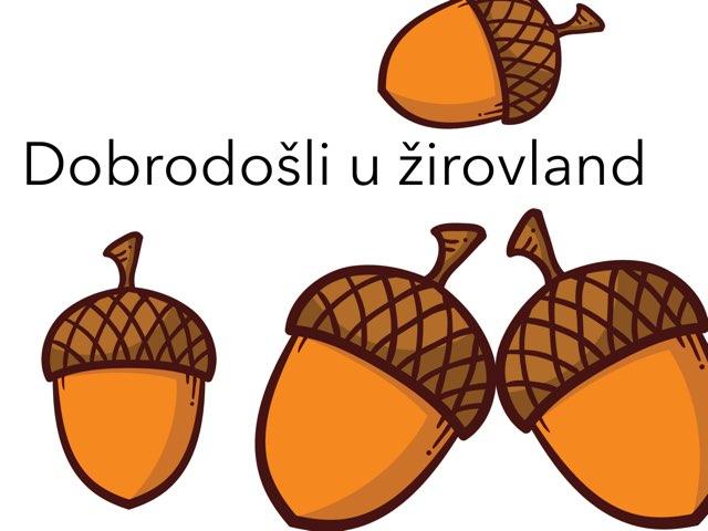 Žirova by Vanja antić