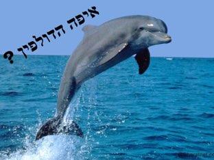 הדולפין וחבריו by יהודית מלכה