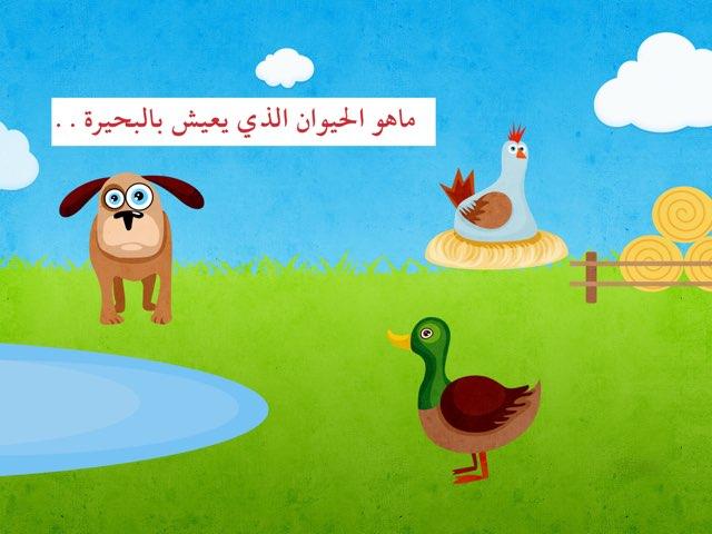 الحيوانات by S. alhaddad