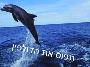 תפוס את הדולפין by Tal Michalovici