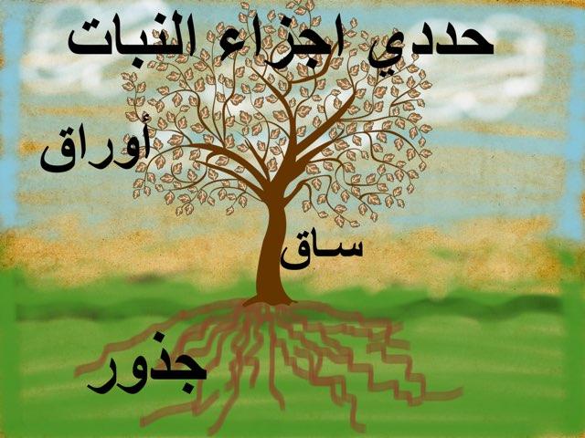 اجزاء النبات by Rere Rere