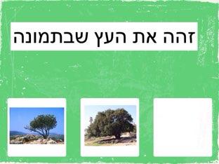 פרויקט העצים by Miriam Cohen Sabato