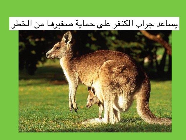 لعبة الكنغر by Ahmad ahmad