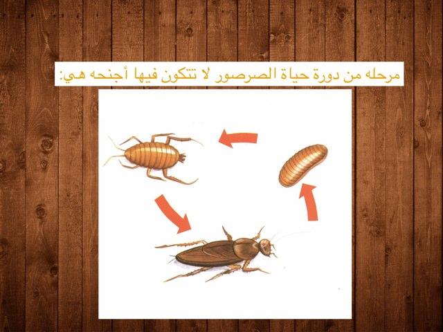 كيف تنمو العناكب والحشرات؟ by abla ohoud