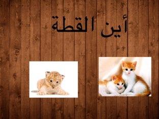 حيوانات  by Sara āo