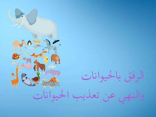 الرفق بالحيوان وتعذيب الحيوان by reemas himdi