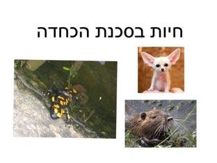משחק 8 by Netaaya Schwartz