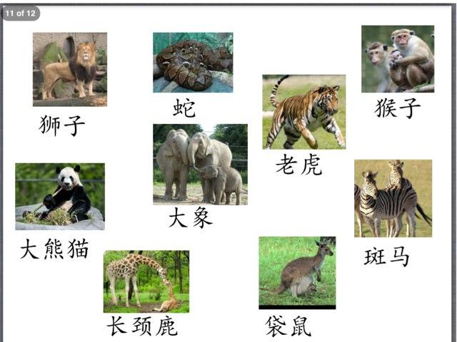 y4 动物园有什么 by Bradbury Pu