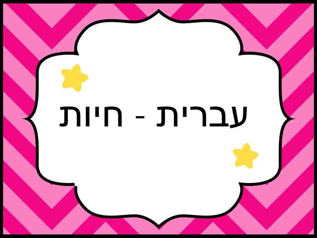 עברית by שרון מכמן