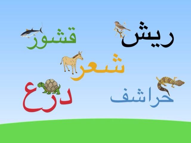 لعبة 67 by Reem Adel