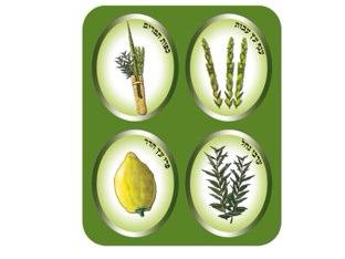 ארבעת המינים by אילנה דהן
