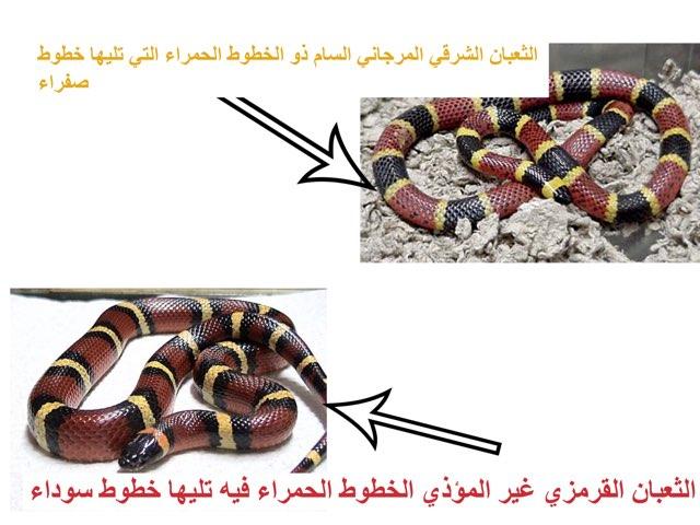 لعبة المماثلة by Ahmad ahmad